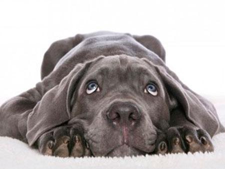 икота у собак