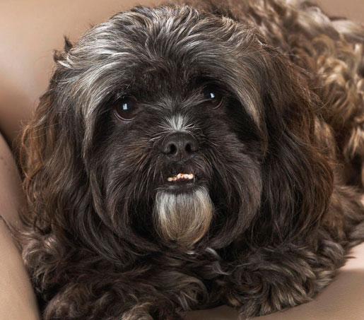 лечение отравления у собак