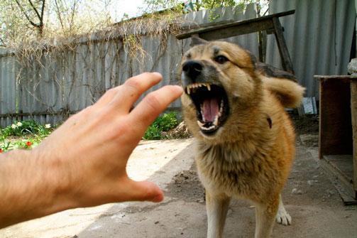 вакцина от бешенства для собак