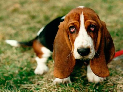 острый панкреатит у собаки