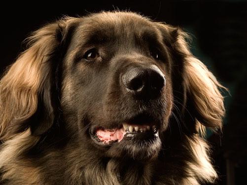 лечение пироплазмоза у собак в москве