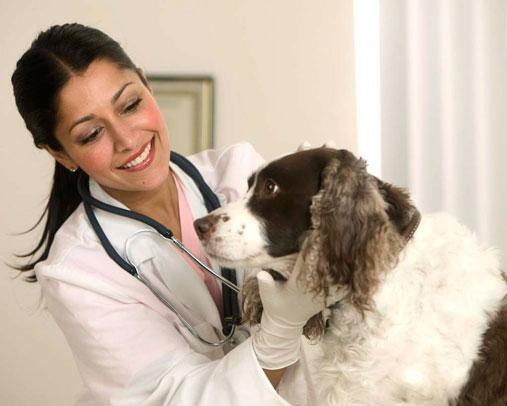 вызов ветеринара на дом москва