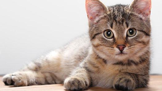лечение поджелудочной железы у кошки
