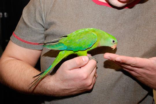 орнитолог Москва
