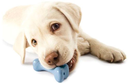 стоматология для собак