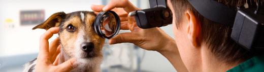 ветеринарный офтальмолог